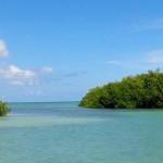 tours manglares