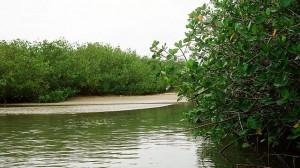 manglares3